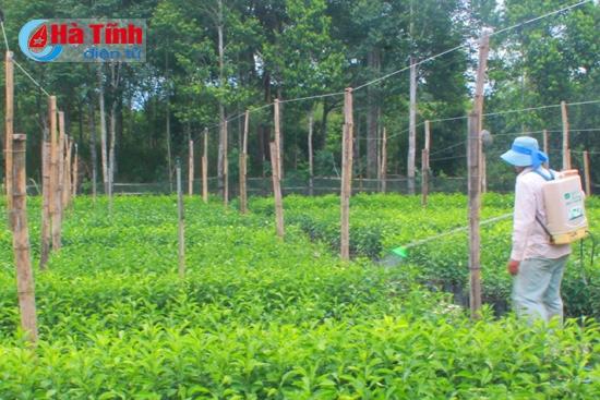 Chăm sóc cây giống tại HTX Dịch vụ nông nghiệp Thanh Hiền ở xã Thượng Lộc (Can Lộc).