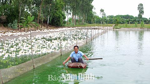 Mô hình trang trại chăn nuôi tổng hợp của gia đình anh Nguyễn Quang Thủy, xã Minh Tân (Vụ Bản) cho thu nhập 500-600 triệu đồng/năm
