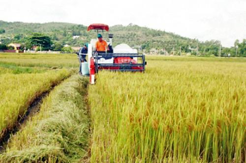 Quảng Bình- Quảng Trị: Vốn đầu tư cho tam nông tăng mạnh