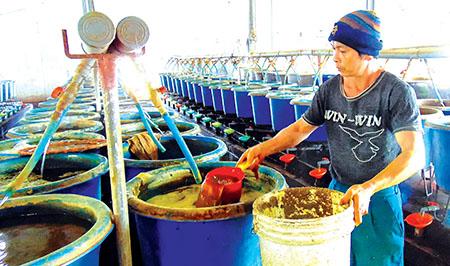 Công ty Cổ phần Nông thủy sản Đạt Doan (Thái Thụy) mở rộng quy mô sản xuất nhờ nguồn vốn tín dụng ngân hàng