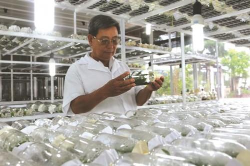 Quy trình ươm mầm sản phẩm rau sạch ở Củ Chi (TP.HCM) một trong những mô hình phát triển hơn từ đòn bẩy tín dụng