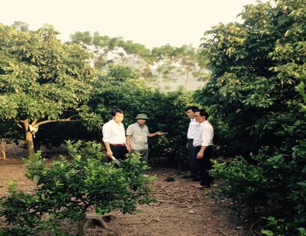 Trang trại trồng cây ăn quả kết hợp chăn nuôi của hộ gia đình anh Lại Văn Mạnh – Thôn Tiên Mai – xã Hương Sơn