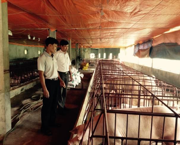 Trang trại chăn nuôi lợn nái của hộ anh Phạm Văn Huấn – Thôn Đục Khê – xã Hương Sơn