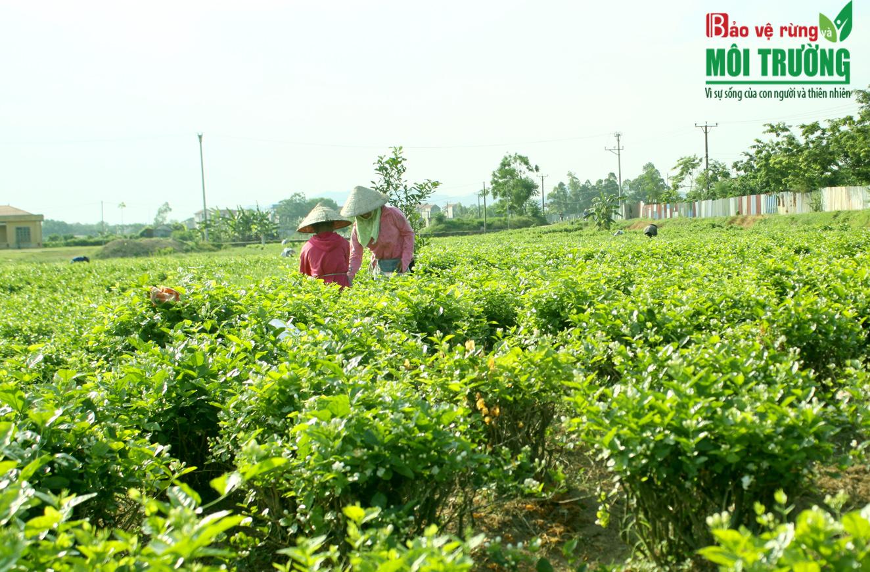 Hộ-gia-đình-sẽ-có-nhiều-chính-sách-hỗ-trợ-khi-sản-xuất-nông-nghiệp-hữu-cơ